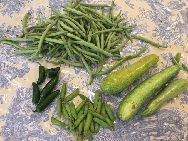 freshly picked green beans, peas, peppers and zucchini