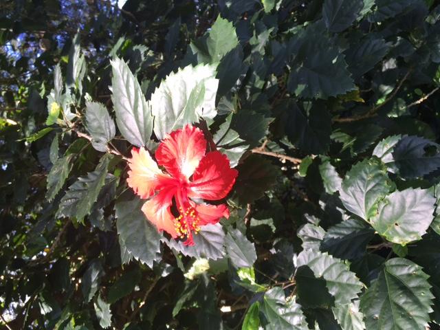 Flowers in January