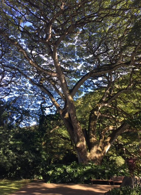 A tree can be so beautiful.