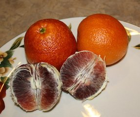 A colorful blood orange ready to make a smoothie