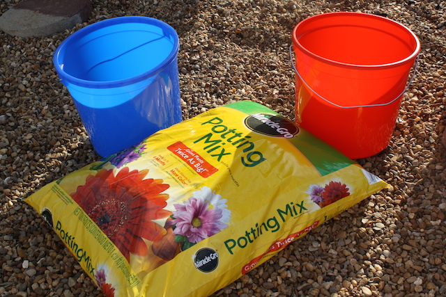Two colorful buckets and some potting soil for planting avocado seeds.